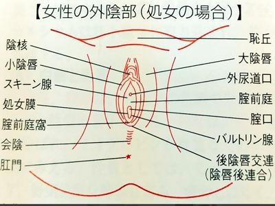女性器 外陰部