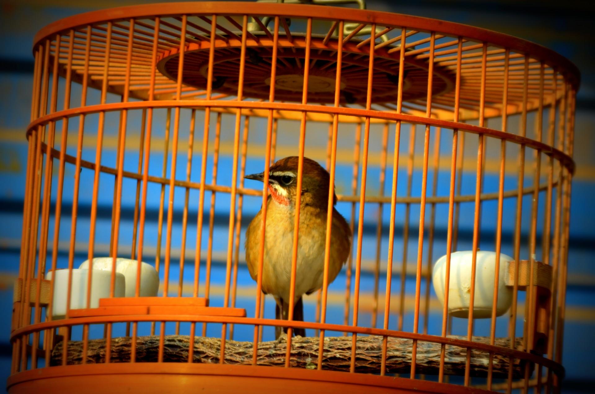 bird-in-cage-1386508696FuS