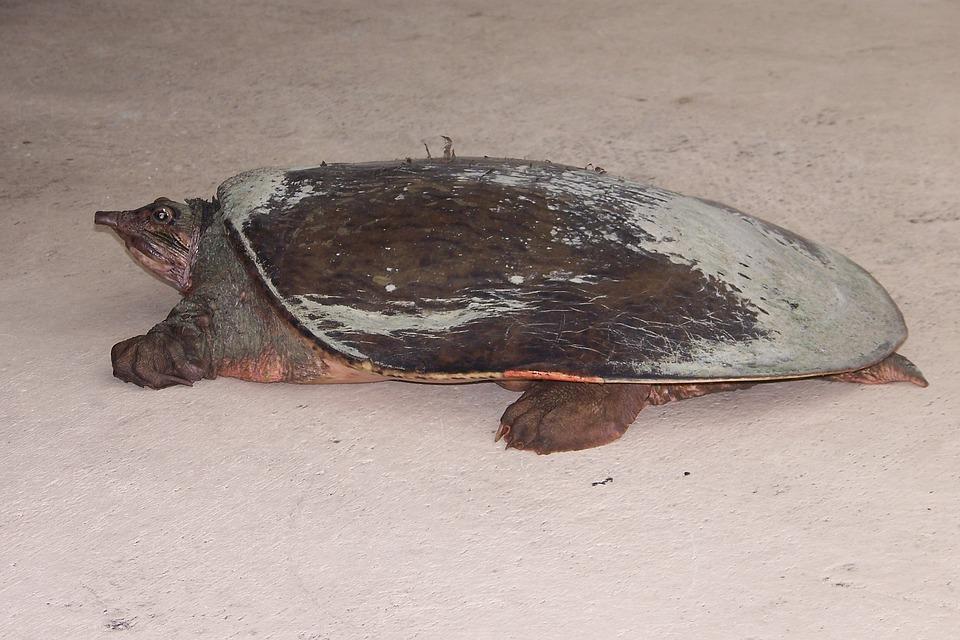 turtle-1277066_960_720