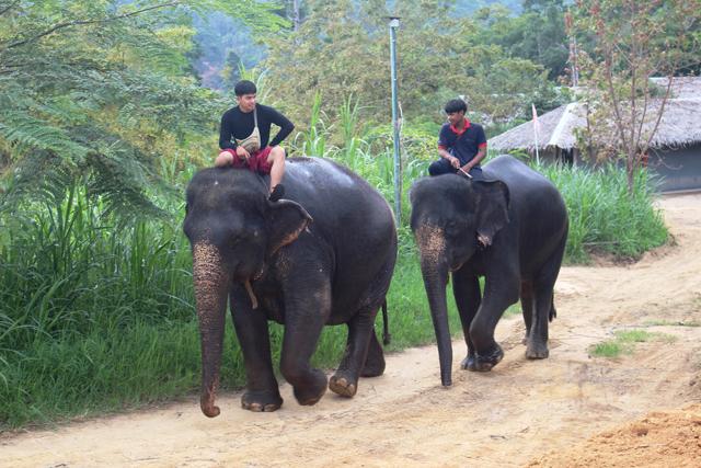 時々、象さんとすれ違うのがタイのビーチリゾートなのだ