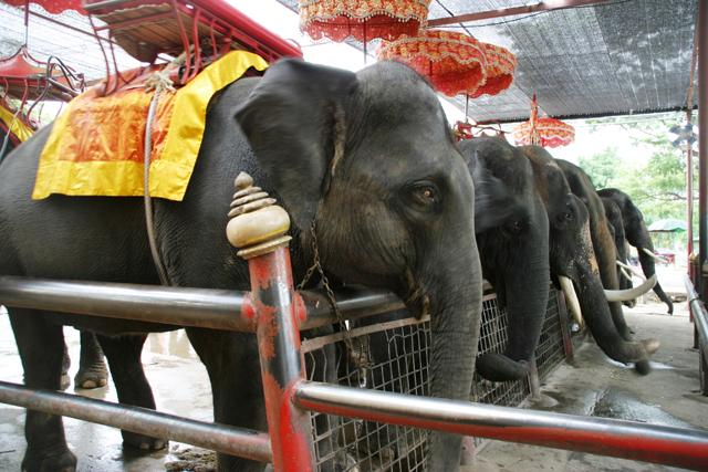 おじさんだって象に乗って観光してもいいんだゾウ