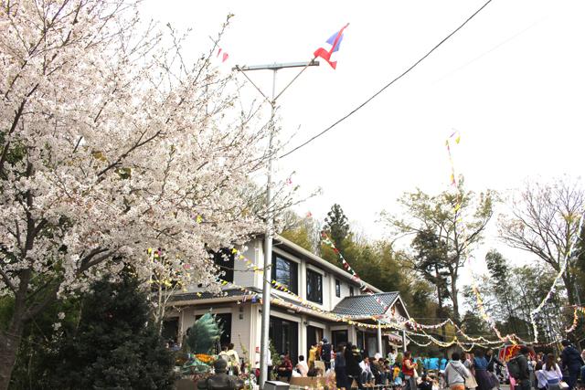 ワット・パー・プッタランシーには、ぎりぎり薄紅色が残る桜があった。タイと日本の国旗も翻る