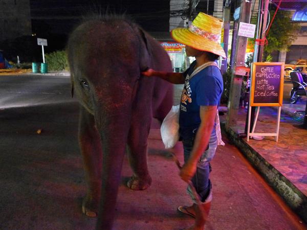地方の歓楽街ではよく象も見る。エサのサトウキビを買ってチップを渡すのだ